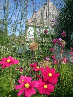through garden
